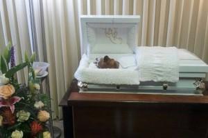 Féretros, velatorios y relicarios: cuando el entierro de mascotas supera al de los seres humanos