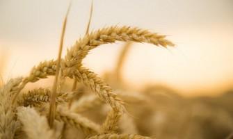 «Pero el que fue sembrado en tierra buena,  es el que oye la Palabra y la comprende: éste sí que da fruto».
