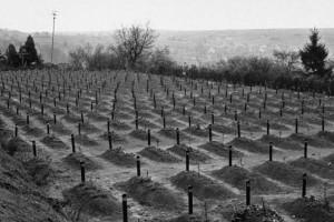 El engaño con el que los médicos nazis escondieron el exterminio de miles de bebés «disminuidos»