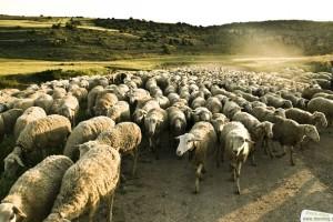 «Andaban como ovejas sin pastor»